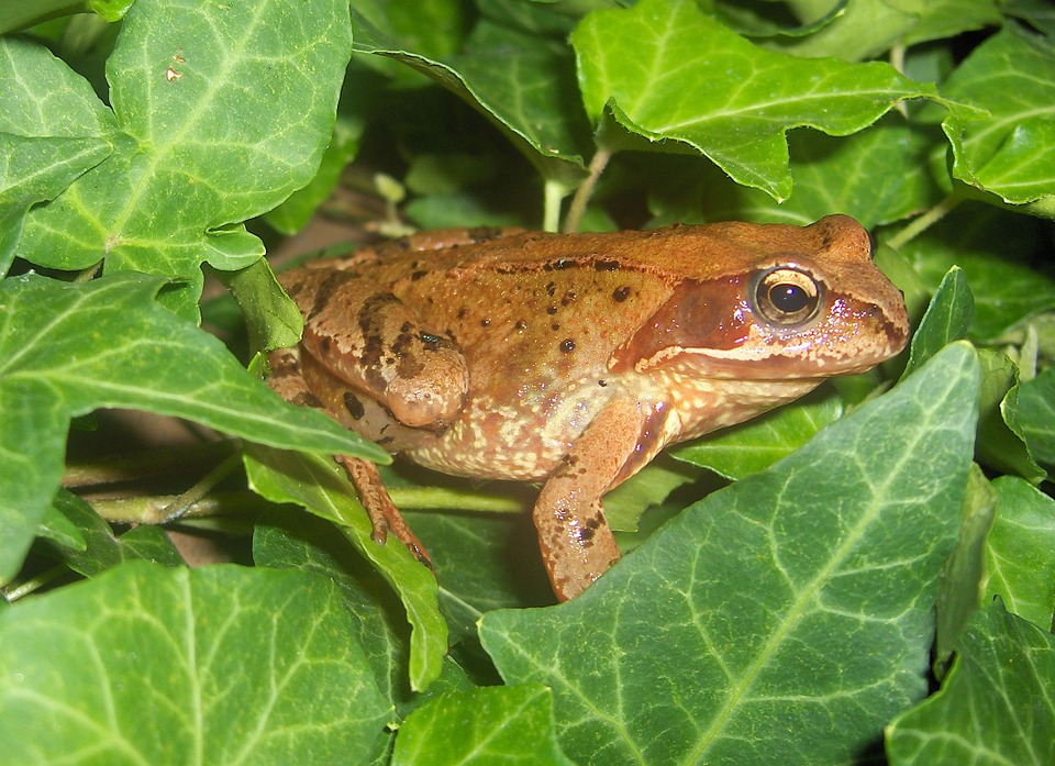 toad-944722_960_720
